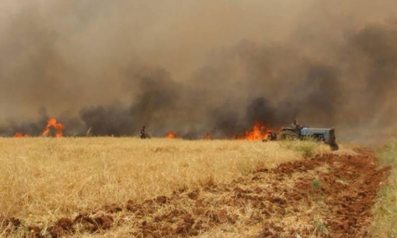 حرائق المحاصيل الزراعية في منطقة السلمية في ريف حماة الشرقي في 17 من أيار 2020 - (الوطن)