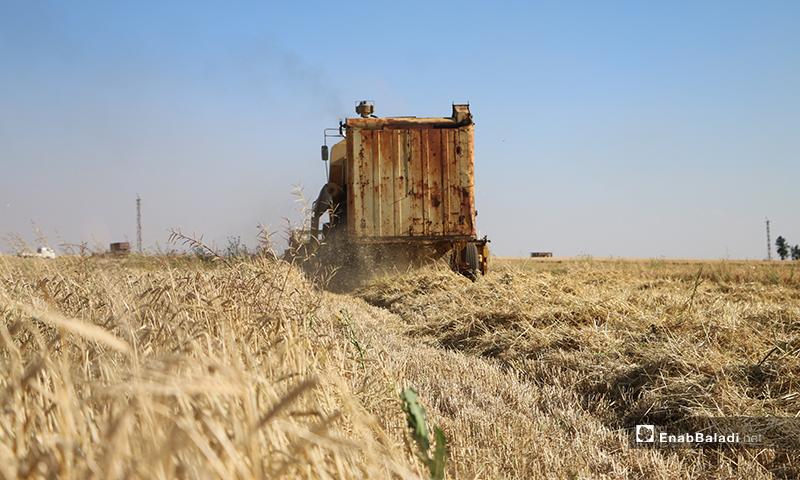 حصادة في ريف حلب الشمالي تحصد االشعير- 30 من أيار (عبدالسلام مجعان/عنب بلدي)