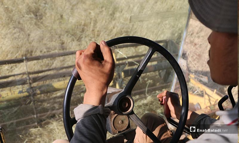 سائق الحصادة من منطقة قيادته لها في أثناء حصده الشعير بريف حلب الشمالي- 30 من أيار (عبدالسلام مجعان/عنب بلدي)