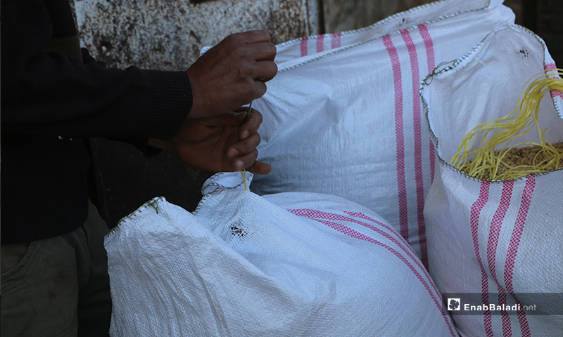 خياطة أكياس الشعير بعد تعبئتها في ريف حلب الشمالي- 30 من أيار (عبدالسلام مجعان/ عنب بلدي)