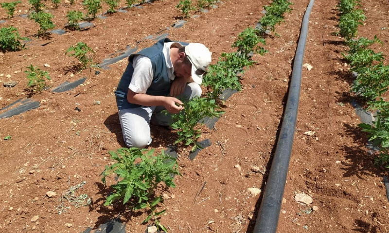 مهندس زراعي يعطي درس حول أنواع الأمراض النباتية خلال المشروع (مسرات)