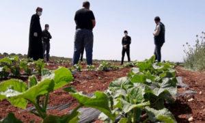 مزارعون يتلقون دروس عملية من قبل مهندسين زراعيين في مشروع دعم سلسلة القيمة للخضار (مسرات)