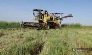 حصادة زراعية في بلدة احتيمالات بريف حلب الشمالي - 18 أيار 2020 (عنب بلدي/ عبد السلام مجعان)