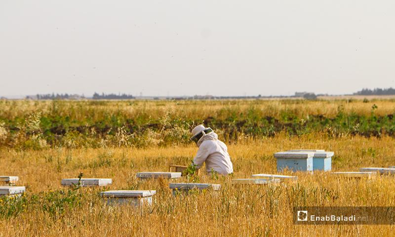 يكشف النحال (فني النحل) على الخلايا في فصلي الربيع والصيف لنشاط النحل ويقل الكشف في الشتاء ويختلف من منطقة لمنطقة