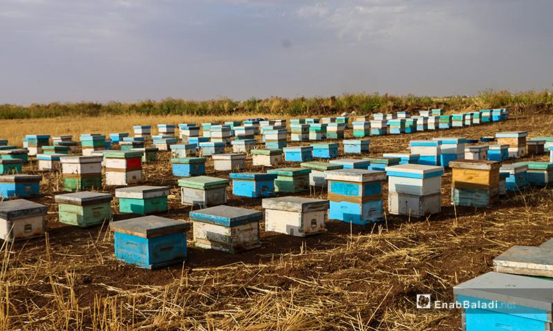 يتكون المنحل من عدد من الخلايا الخشبية والتي تعد مادة طبيعية لعزل النحل من تقلبات الحرارة والبرودة