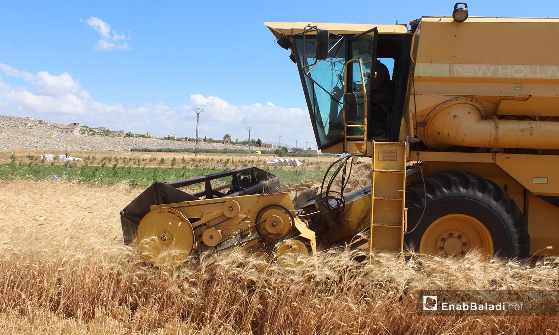 حصاد القمح في سهل الروج بريف إدلب - 4 حزيران 2020 (عنب بلدي/إياد عبد الجواد)