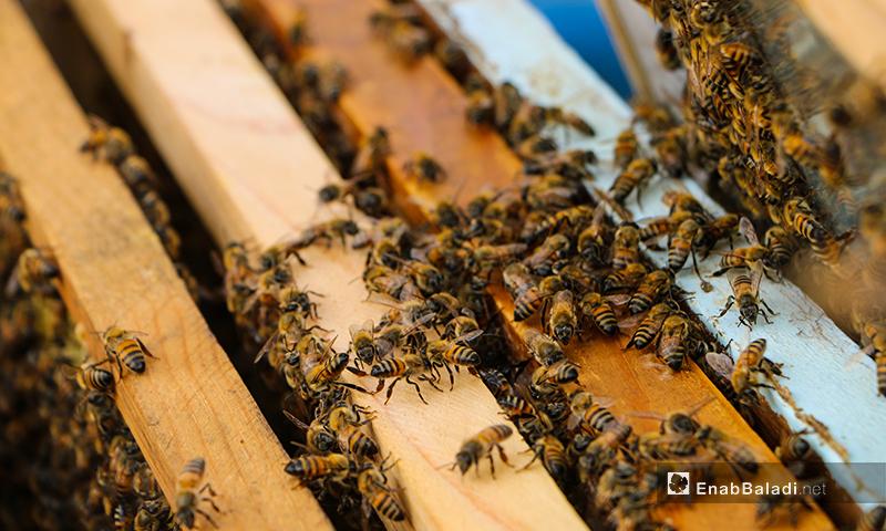 ليطمئن على سلامة الخلية وخلوها من أي أمراض أو طفيليات موجودة كقرادة النحل وسير عملها واحتياجاتها