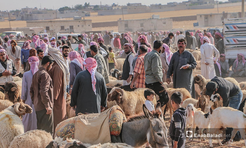 سوق الأغنام في بلدة أرشاف بريف حلب الشمالي قبل أيام من عيد الأضحى - 27 تموز 2020 (عنب بلدي/ عبد السلام مجعان)