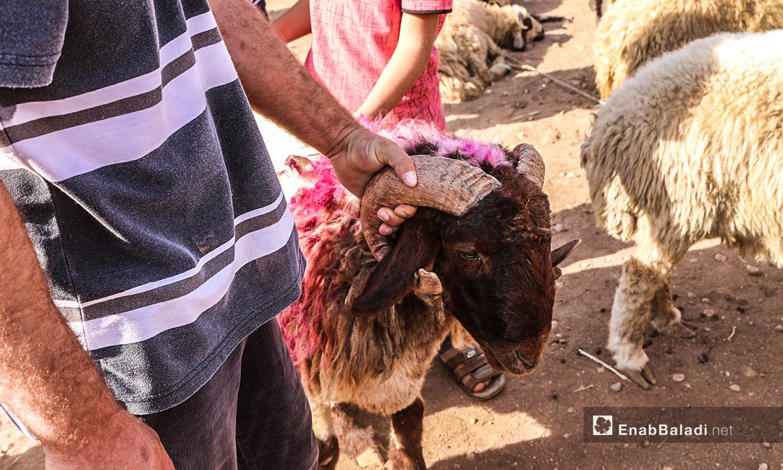 شراء الأغنام في بلدة أرشاف قبل أيام من عيد الأضحى - 27 تموز 2020 (عنب بلدي/ عبد السلام مجعان)