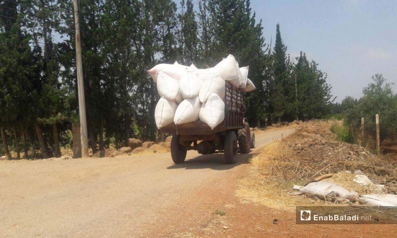 جرار يحمل القمح المحصود ضمن أكياس في ريف درعا الغربي - 5 تموز 2020 (عنب بلدي)