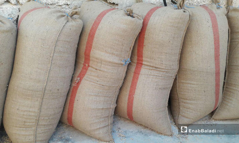 أكياس القمح المحصود في ريف درعا الغربي - 5 تموز 2020 (عنب بلدي/حليم محمد)