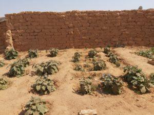 مشروع زراعي في الحيقة بمخيم الركبان