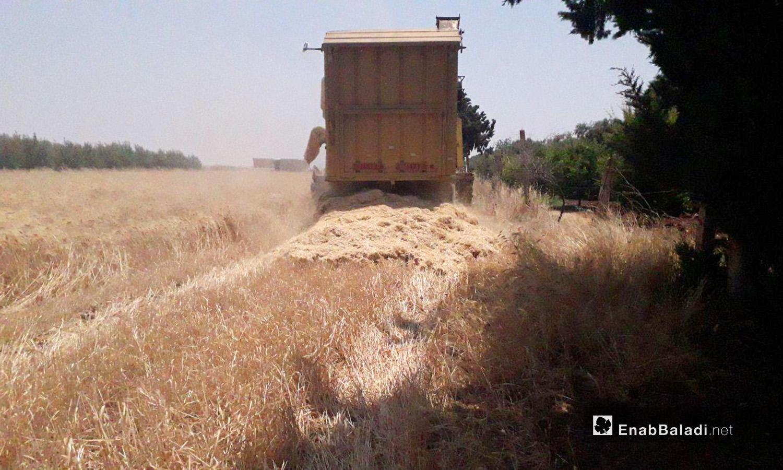 حصادة تحصد القمح في ريف درعا الغربي - 5 تموز 2020 (عنب بلدي/حليم محمد)