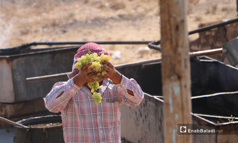 رجل يحمل عنقود عنب للبدء بمراحل صناعة الدبس في قرية دوديان بريف حلب الشمالي - 17 أيلول 2020 (عنب بلدي/ عبد السلام مجعان)