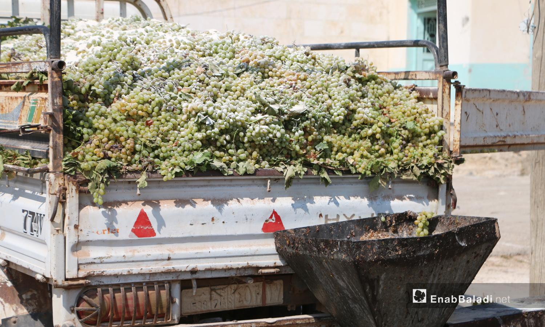 تحمل حبات العنب المجموع لصناعة الدبس وتنقل إلى المعصرة - 17 أيلول 2020 (عنب بلدي/ عبد السلام مجعان)