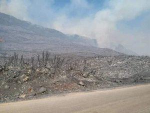 صورة تظهر دمار المساحات الخضراء في الأحراج الجبلية بعد حريق تل الكروم 2 من أيلول 2020 (فيس بوك)