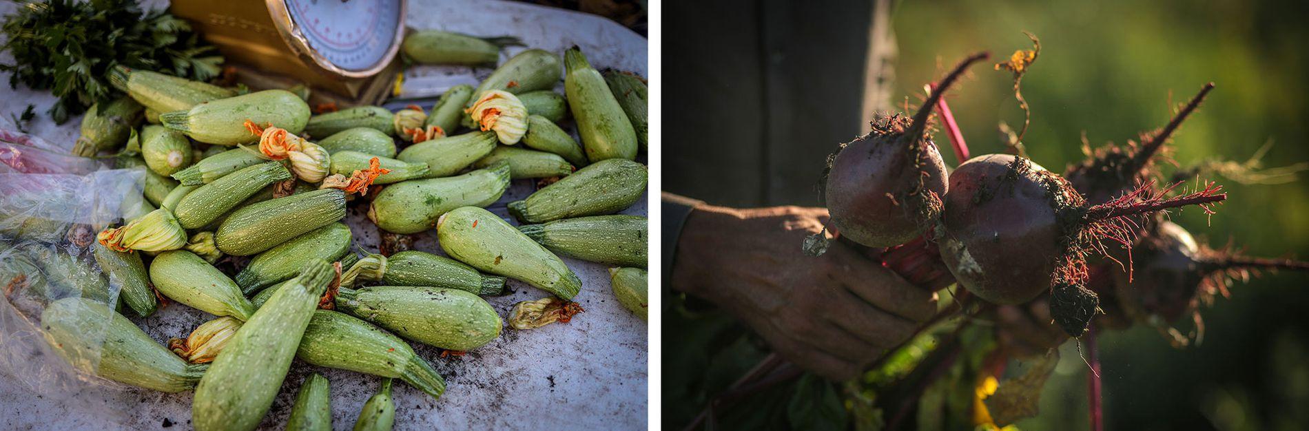 المنتجات الغذائية التي تنتجها مزرعة عائلة محمد الضاهر في كندا