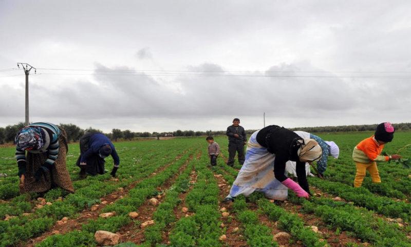 أراض زراعية في ريف حماة ( AFP).