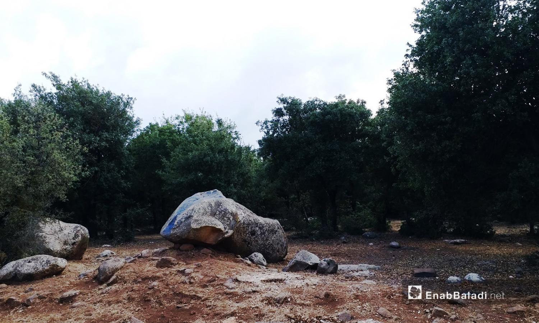 احتفظت محمية جباتا الخشب بأشجارها رغم سنوات الحرب بعد أن اعتنى بها سكان القرى المجاورة - تشرين الثاني 2020 (عنب بلدي)