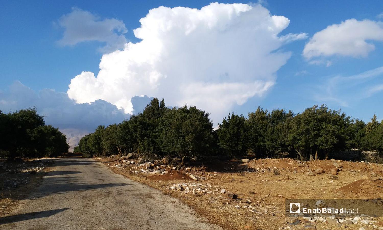 الطريق المعبد الواصل إلى محمية جباتا الخشب في ريف القنيطرة الشمالي - تشرين الثاني 2020 (عنب بلدي)