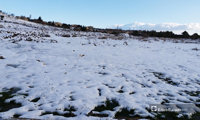 اكتست الأرض في الثلوج  بمدينة القنيطرة - 21 كانون الثاني 2021 (عنب بلدي)