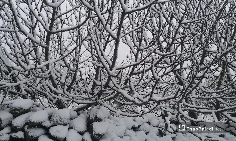 الثلوج تغطي أغصان الأشخار في مدينة القنيطرة - 21 كانون الثاني 2021 (عنب بلدي)