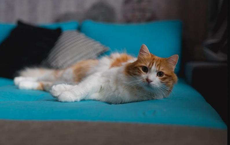 """القط """"طبلوسج"""" في منزل هبة في هولندا- """"موقع vice"""""""