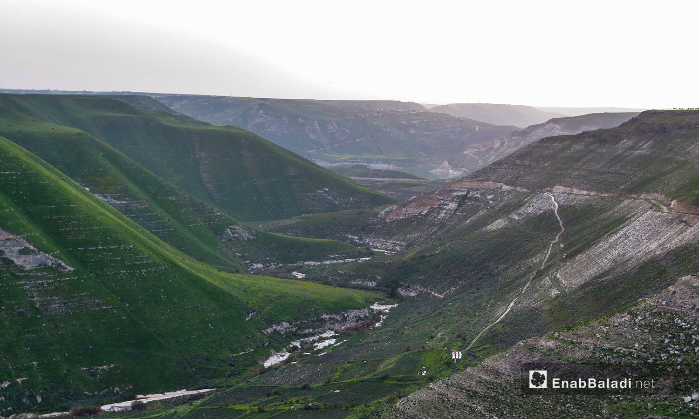 الزراعات الباكورية في وادي زيزون بريف درعا - 28 آذار 2021 (حليم محمد - عنب بلدي )