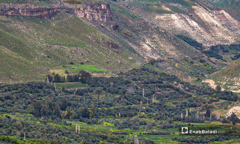 وادي زيزون في ريف درعا - 28 آذار 2021 (حليم محمد - عنب بلدي )