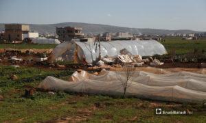 بيوت بلاستيكية للمشاتل والخضروات في بلدة البردقلي شمالي إدلب - 6 آذار 2021 (عنب بلدي / يوسف غريبي)