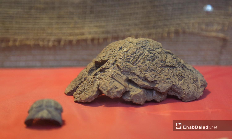 قطغ أثرية متنوعة في متحف مدينة إدلب شباط 2021 (عنب بلدي - يوسف غريبي)