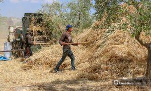 جني محصول القمح بواسطة آلية الدراسة في قرى جبل باريشا شمالي إدلب - 30 أيار 2021 (عنب بلدي/ إياد عبد الجواد)