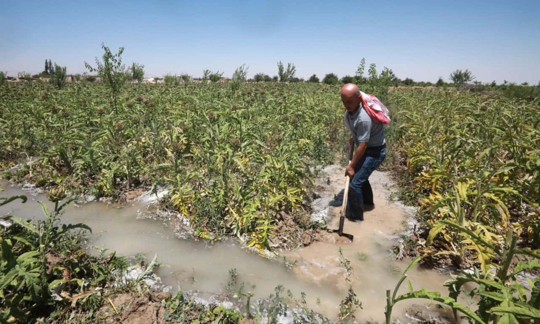 سقاية الأراضي الزراعية في الغوطة (Getty)