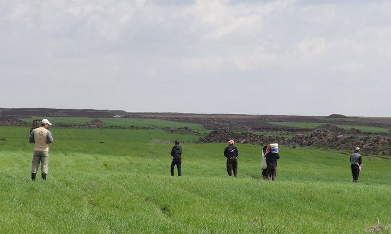 """The """"Benevolent Wheat Field"""" Project in al-Jaidur in Southern Syria – March 15 (NGC Syria)"""