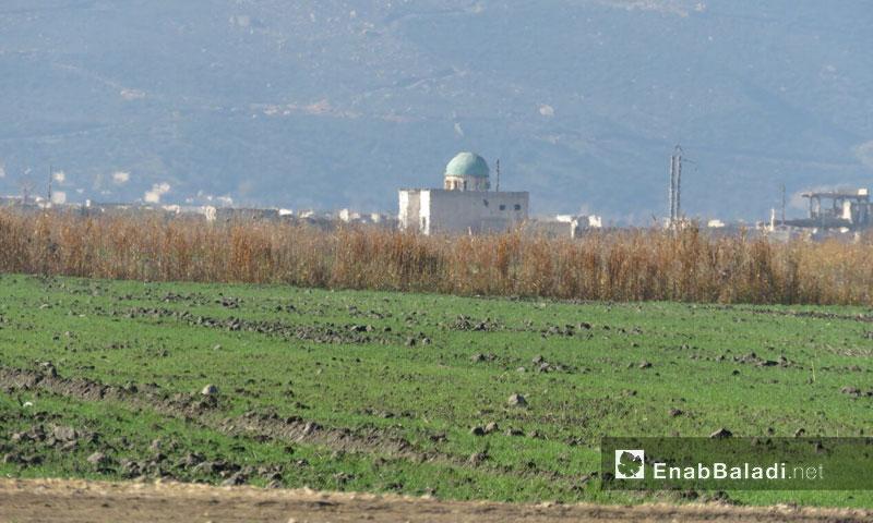 Agricultural lands in Qabr Fidda in the al-Ghab Plain (Enab Baladi)