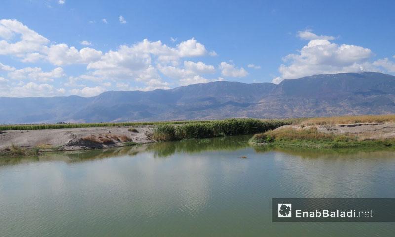Assi River in al-Ghab plain in rural Hama – April 2018 (Enab Baladi)