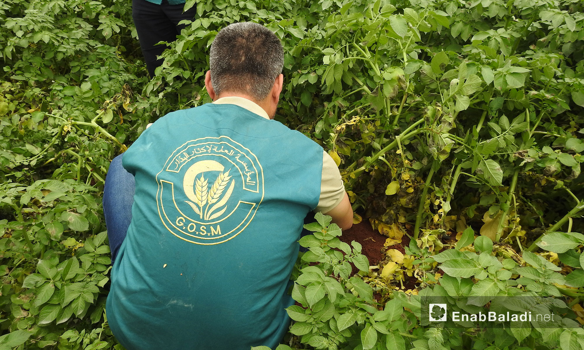 A project by the General Organization for Seed Multiplication in the northern countryside of Aleppo – May 18, 2018 (Enab Baladi)