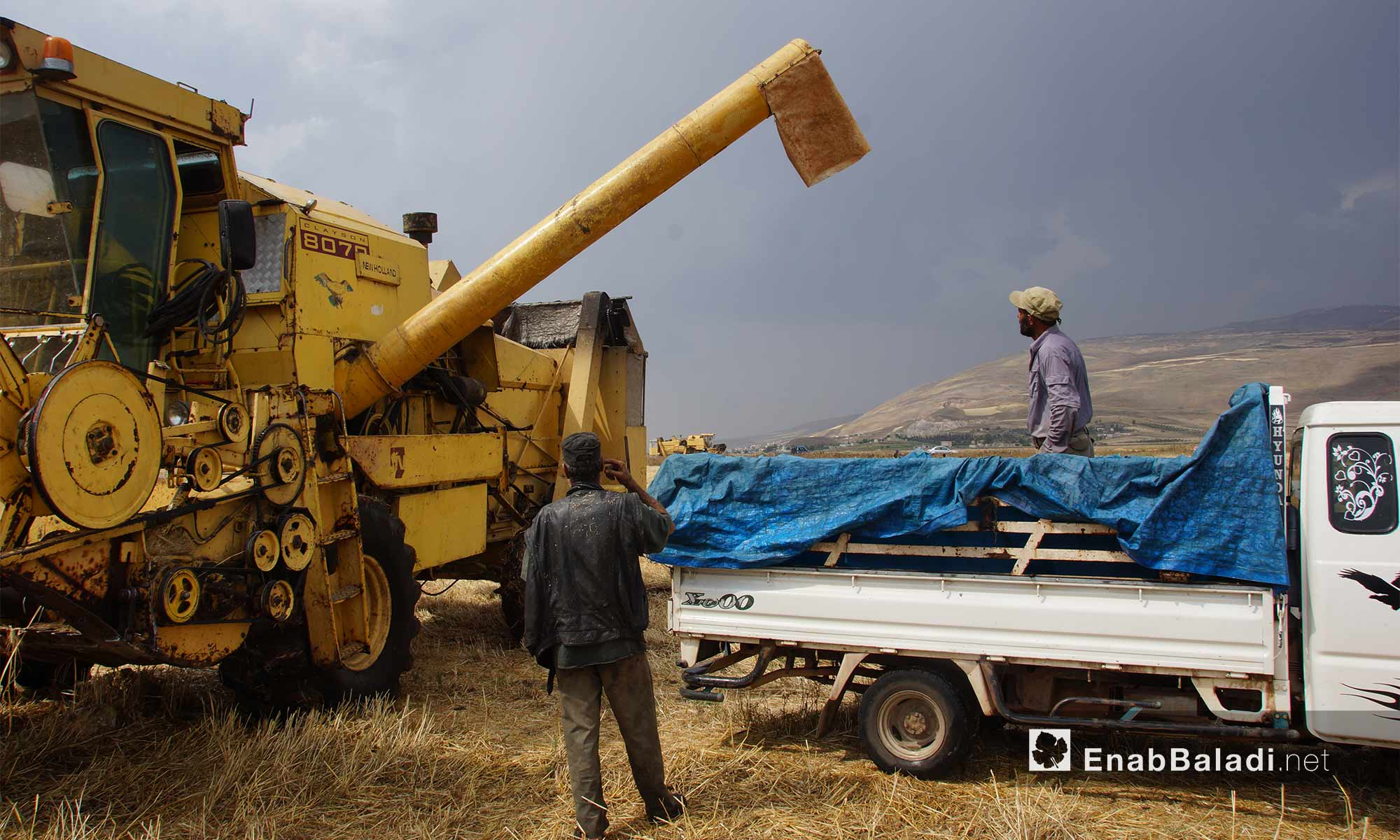 The wheat harvest in al-Ghab plain in rural Hama- May 29, 2018 (Enab Baladi)