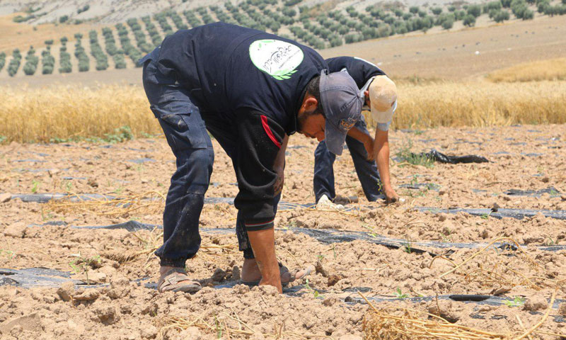 Agricultural Project to Integrate Ghouta's IDP's in the Labor Market in Northern Syria (The Unified Relief Office)