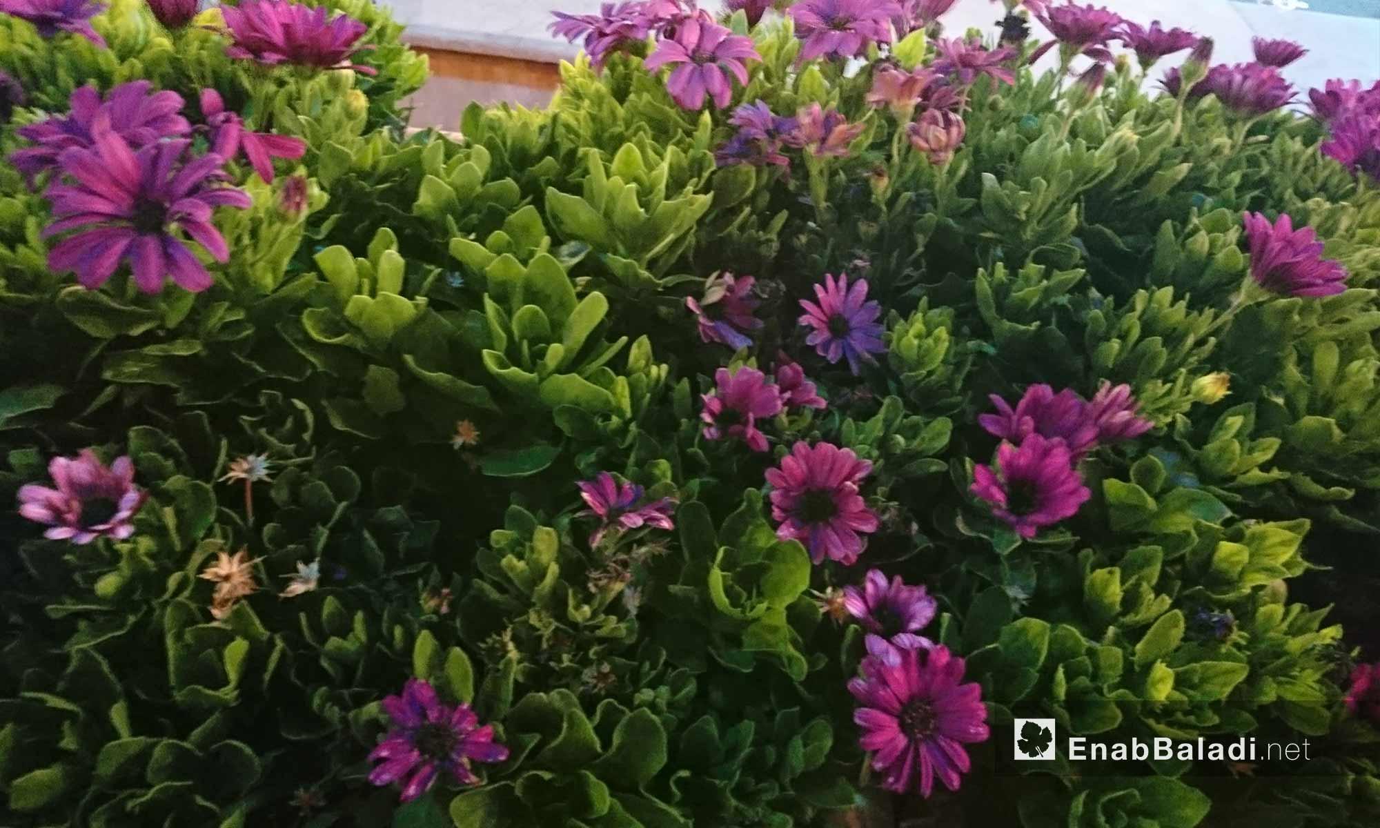Flowers at the Uptown Center, Mashrou Dummar – June 22, 2018 (Enab Baladi)