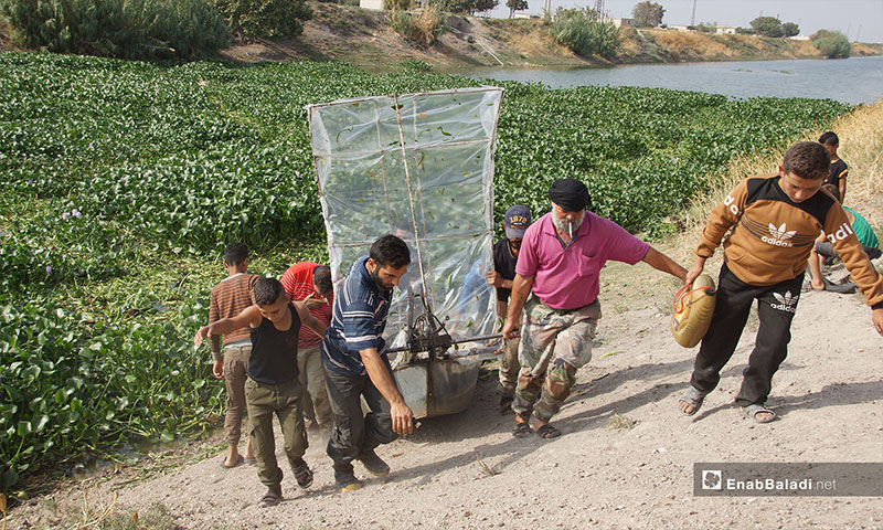 "A new machine for the termination of the """"Eichhornia,"" al-Ghab Plain, rural Hama – October 30, 2018 (Enab Baladi)"