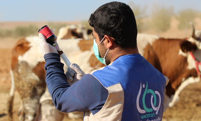 """The development of animal welfare through the qualification of veterinary staffs in Northern Syria by the """"WATAN"""" Foundation – October 2018 (WATAN Foundation)"""