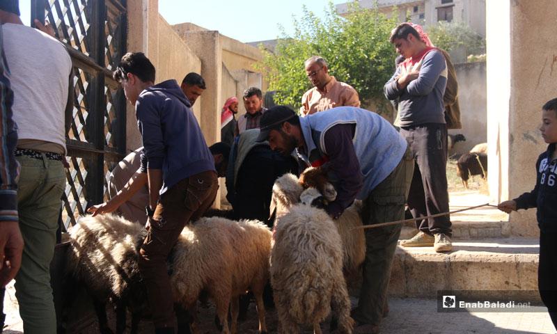 "Distribution of sheep to poor families by ""Watan"" organization in Harem, west Idlib - November 1, 2018 (Enab Baladi)"