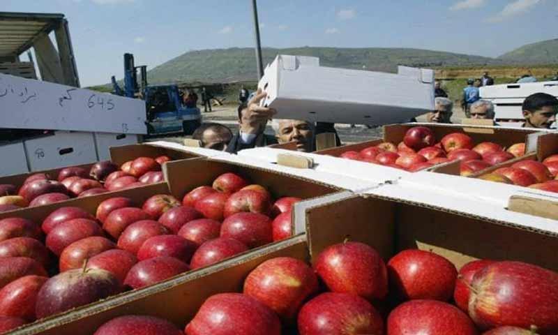 Amounts of Syrian apple on the Jordanian market (alwakaai_news)