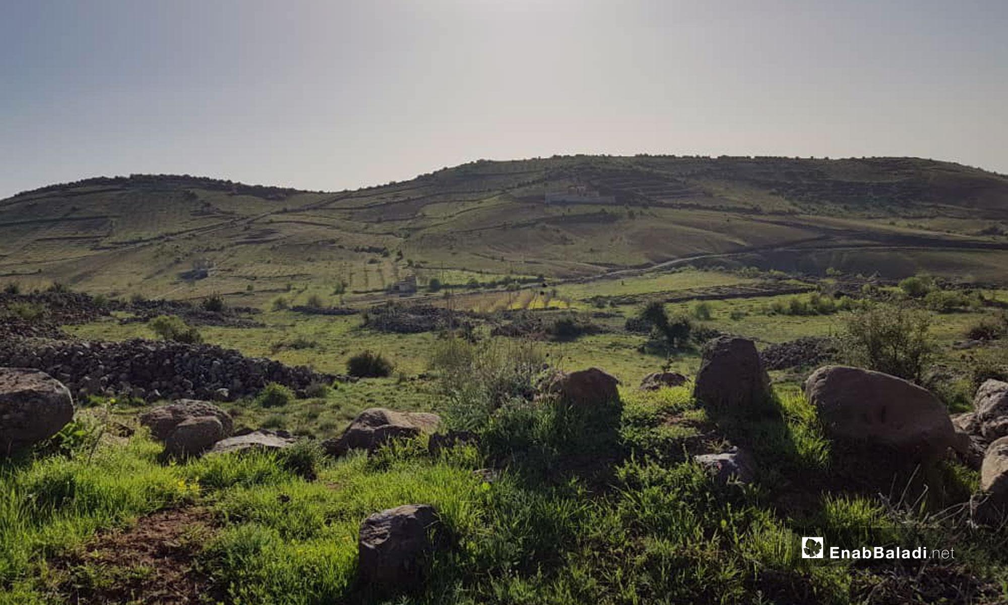 Spring in the city of Sweida - April 9, 2019 (Enab Baladi)