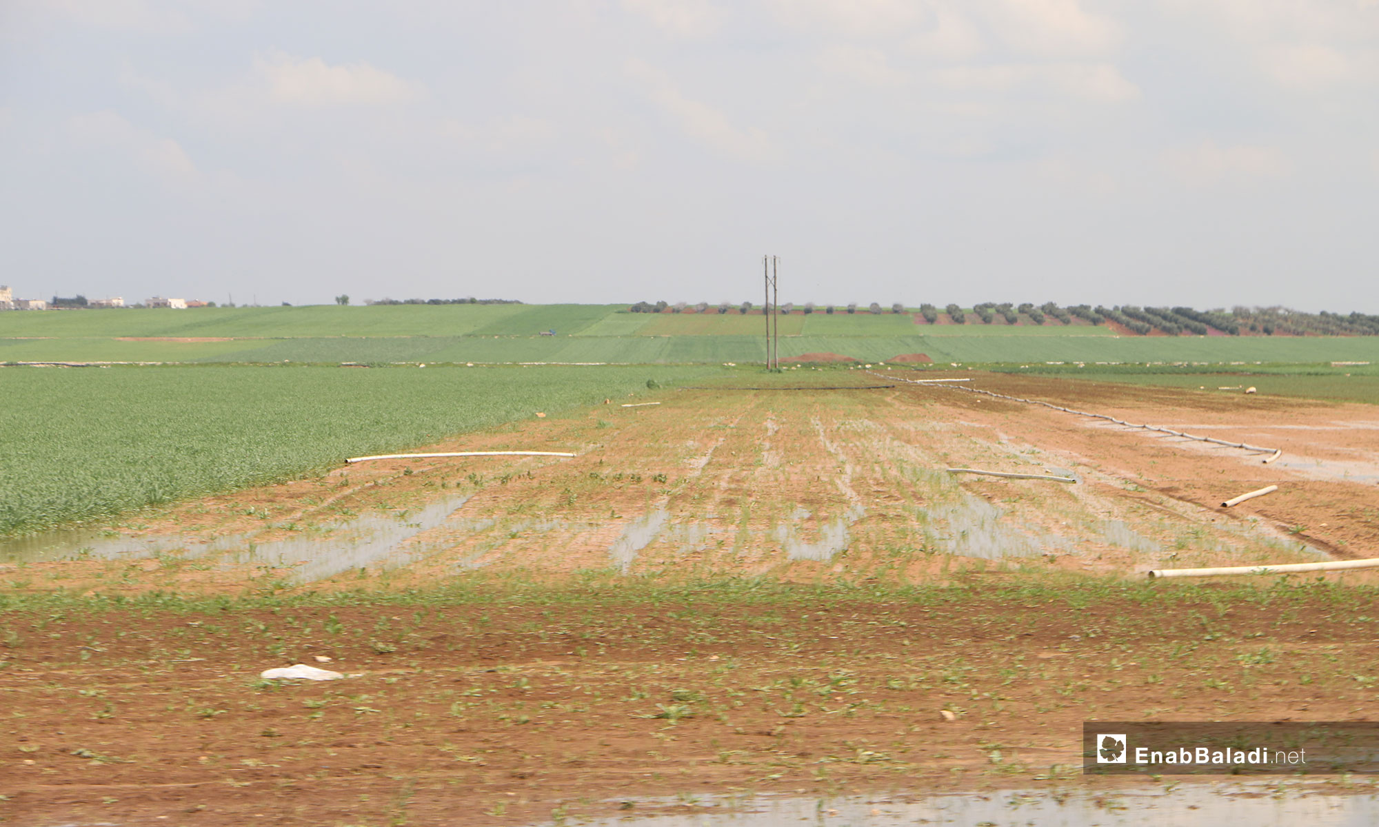 The destruction that befell large agricultural areas in northern rural Aleppo – April 4, 2019 (Enab Baladi)
