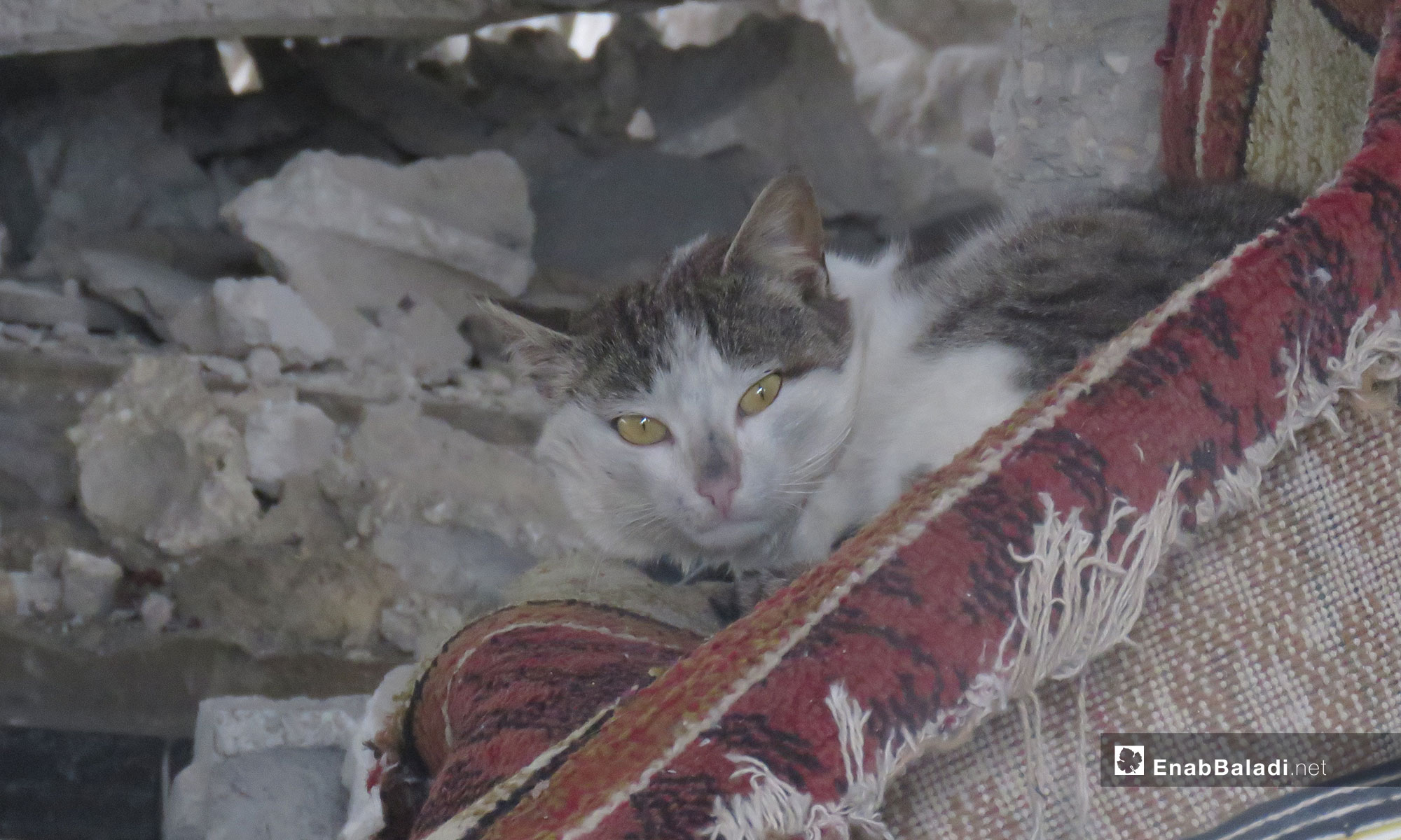 A cat hiding in the debris of the houses in the village of al-Sharia in al-Ghab Plain, rural Hama – March 31, 2019 (Enab Baladi)