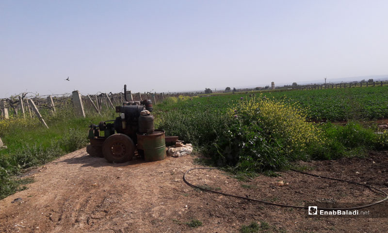 Agricultural lands in the town of Tafas, Daraa countryside - April 13, 2019 (Enab Baladi)