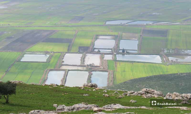 Fish farms in Al-Hwaiz area - 12 April 2019 (Enab Baladi)