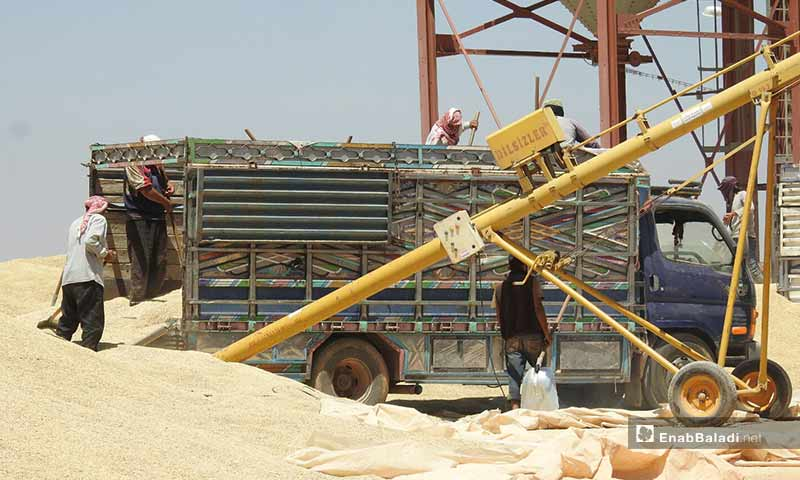 Crops and grains delivered in the city of al-Rai, rural Aleppo – August 2, 2019 (Enab Baladi)